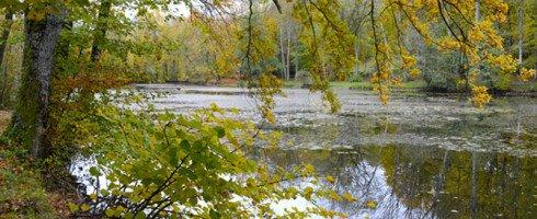 La forêt de Vallin…un lieu énergétique