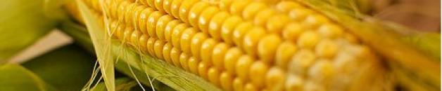 le Salvador interdit les pesticides…pourquoi pas nous ?