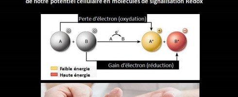 biochimie REDOX et diabete