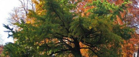 l'arbre aux milles écus