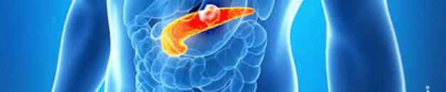 Un composé du vin affame les cellules cancéreuses