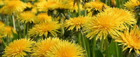 4 plantes extraordinaires pour votre foie