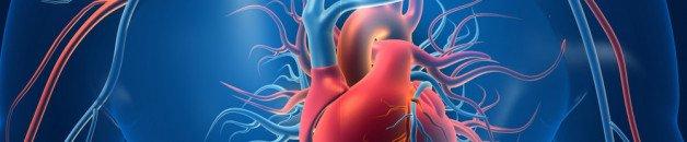 La vitamine D peut-elle engendrer ou aggraver une calcification des artères ?